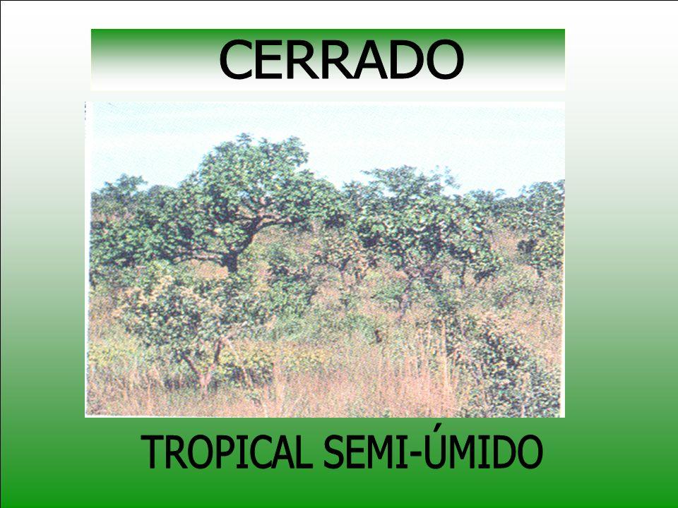 CERRADO TROPICAL SEMI-ÚMIDO