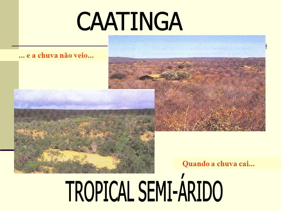 CAATINGA TROPICAL SEMI-ÁRIDO ... e a chuva não veio...
