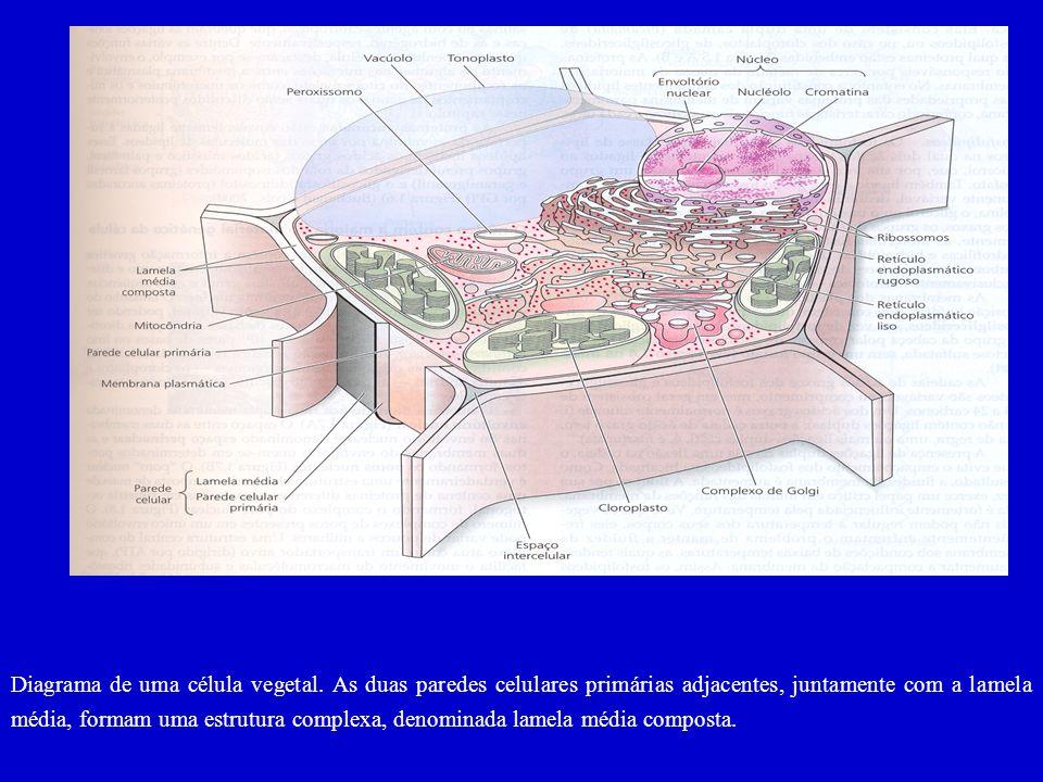 Diagrama de uma célula vegetal