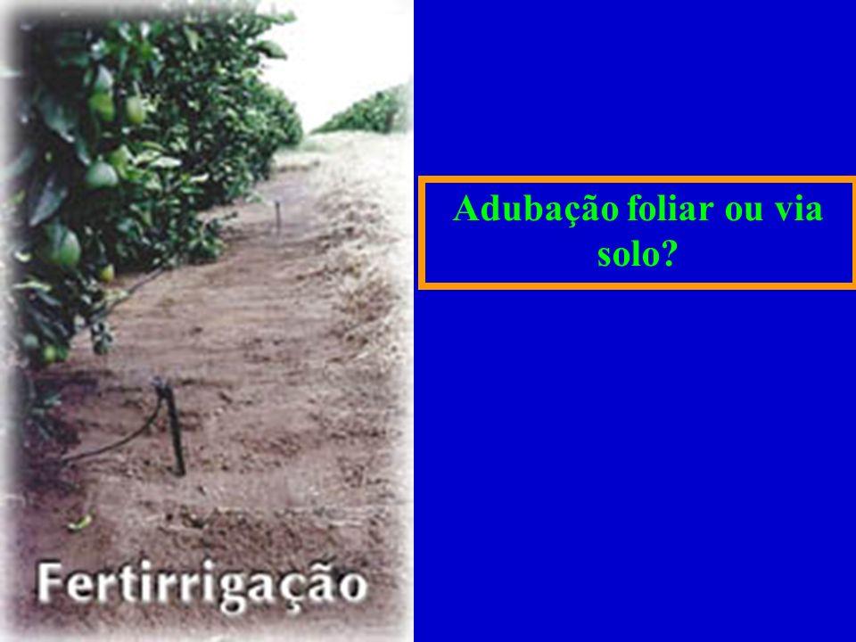 Adubação foliar ou via solo