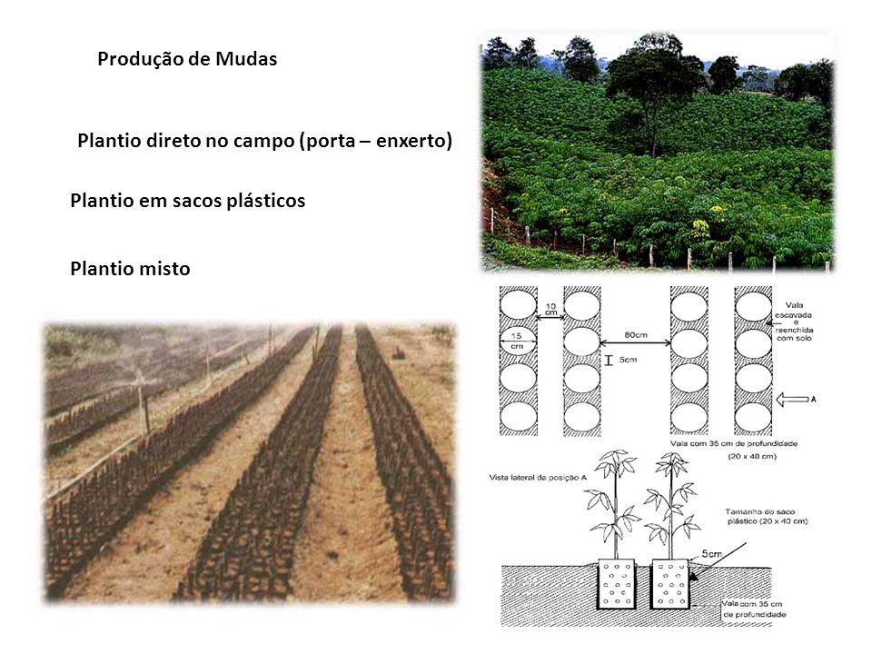 Produção de Mudas Plantio direto no campo (porta – enxerto) Plantio em sacos plásticos.
