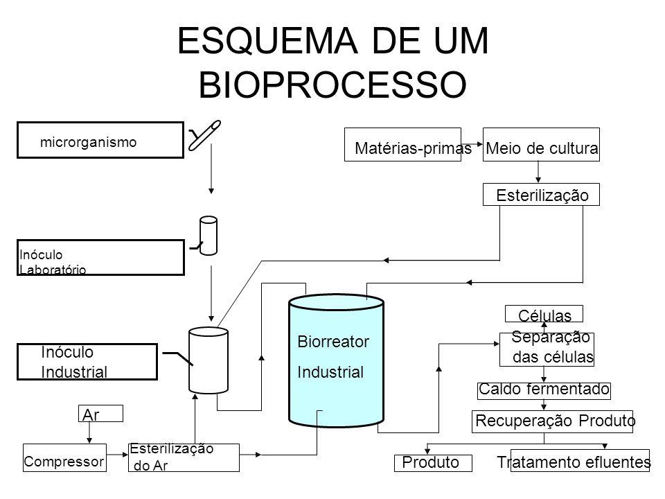 ESQUEMA DE UM BIOPROCESSO