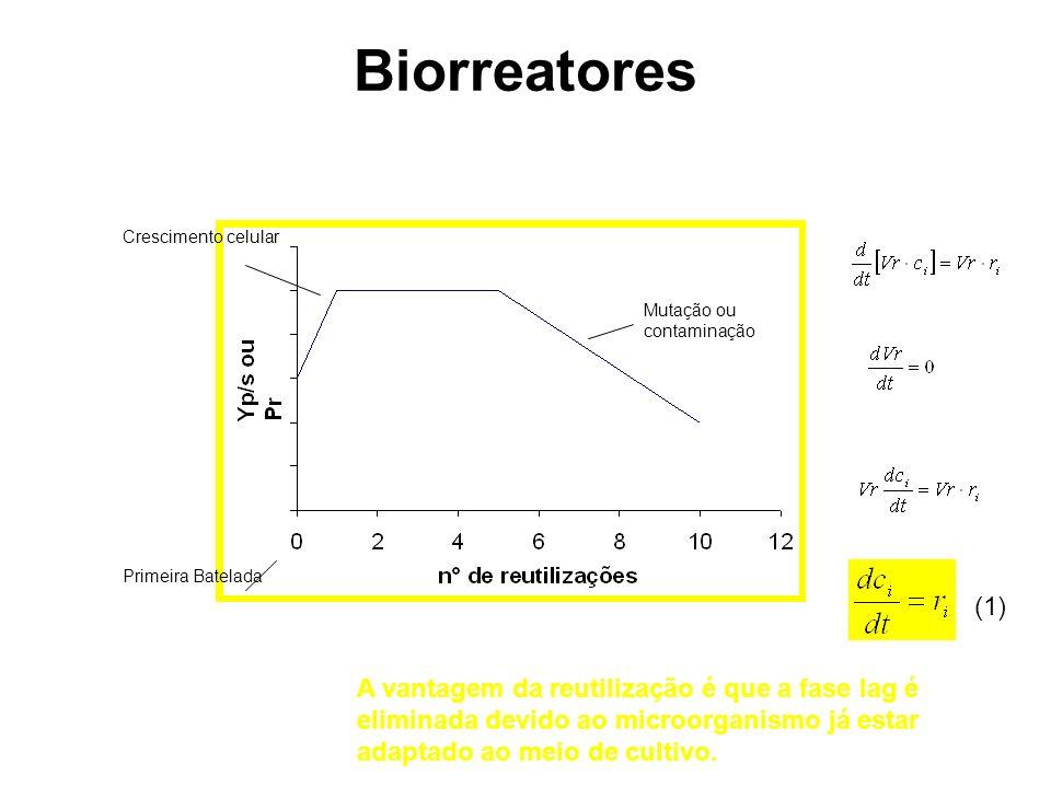 Biorreatores Mutação ou contaminação. Crescimento celular. Primeira Batelada. (1)