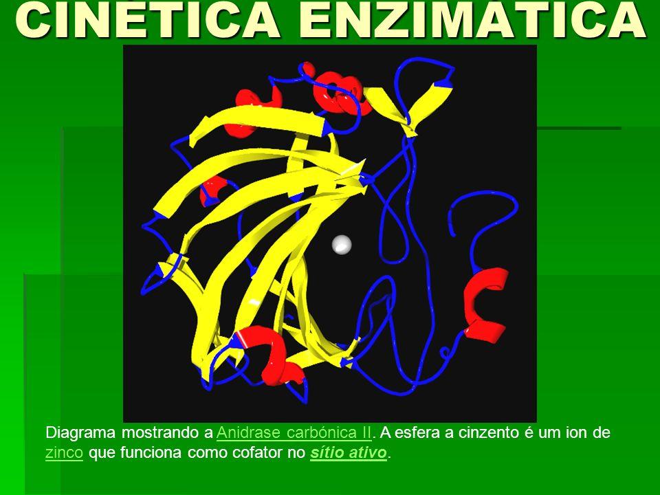 CINÉTICA ENZIMÁTICA Diagrama mostrando a Anidrase carbónica II.