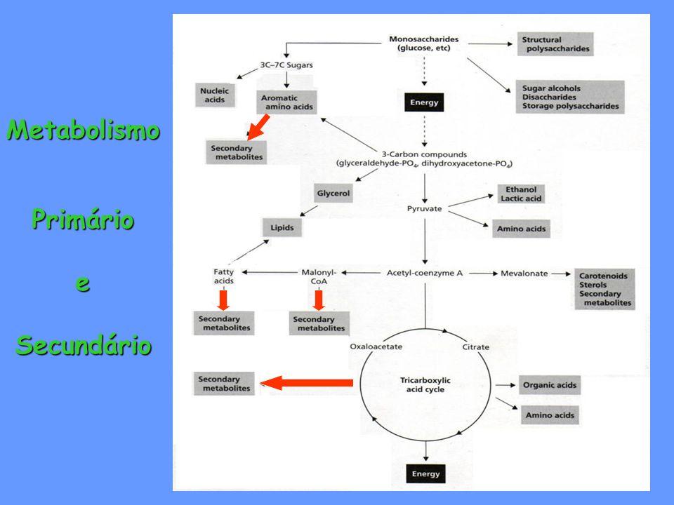 Metabolismo Primário e Secundário