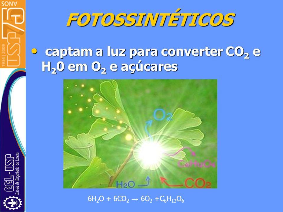 FOTOSSINTÉTICOS captam a luz para converter CO2 e H20 em O2 e açúcares