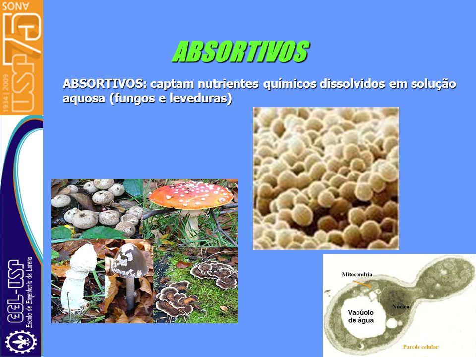 ABSORTIVOS ABSORTIVOS: captam nutrientes químicos dissolvidos em solução aquosa (fungos e leveduras)