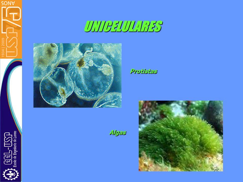 UNICELULARES Protistas Algas