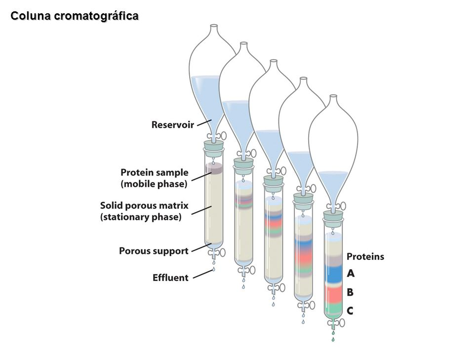 Coluna cromatográfica