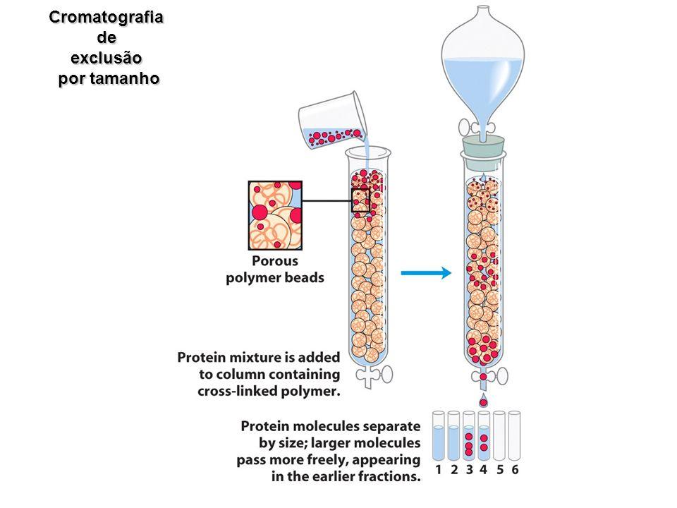 Cromatografia de exclusão por tamanho