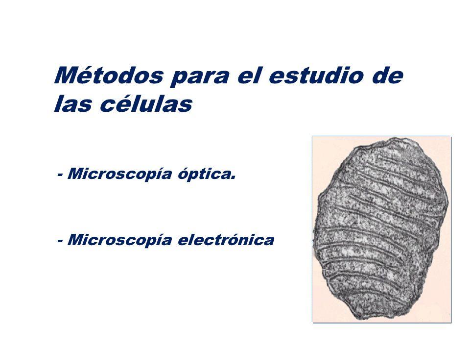 Métodos para el estudio de las células
