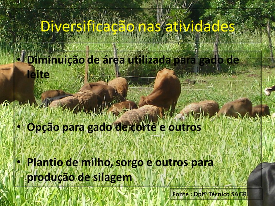 Diversificação nas atividades
