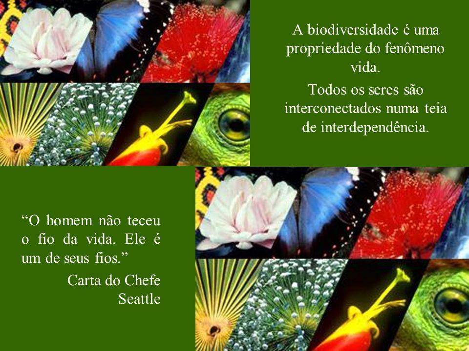 A biodiversidade é uma propriedade do fenômeno vida.