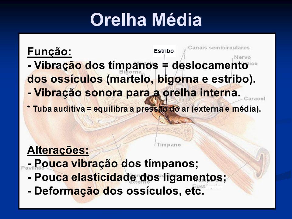 Orelha Média Função: - Vibração dos tímpanos = deslocamento dos ossículos (martelo, bigorna e estribo).