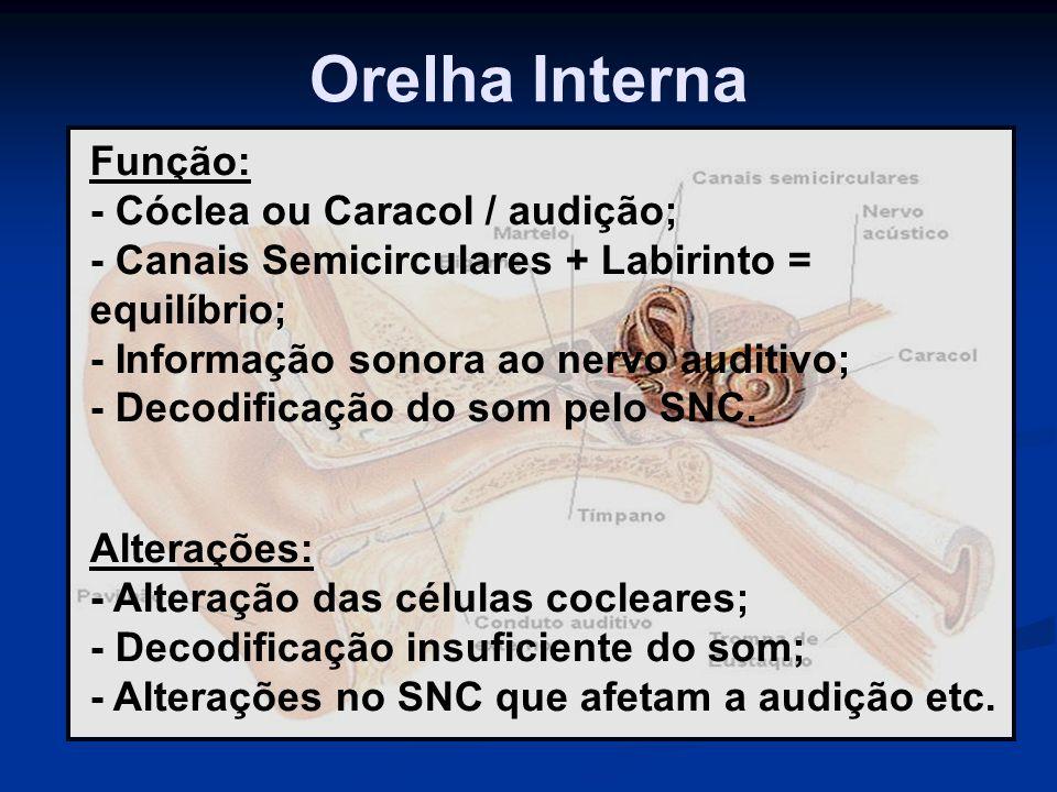 Orelha Interna Função: - Cóclea ou Caracol / audição;