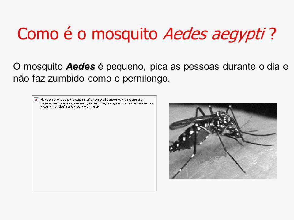 Como é o mosquito Aedes aegypti
