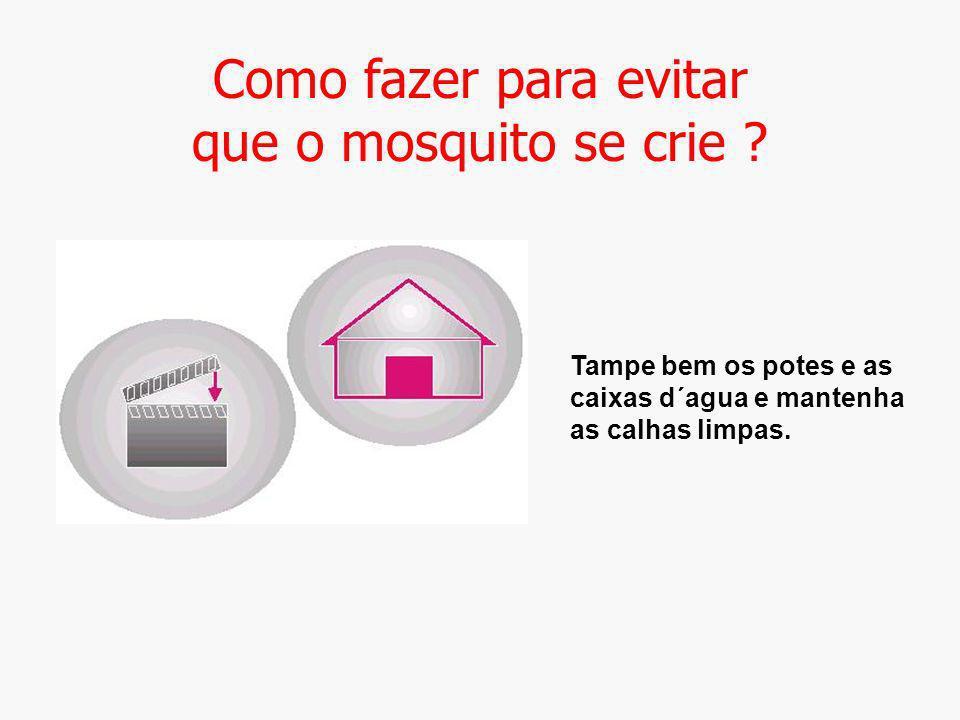Como fazer para evitar que o mosquito se crie