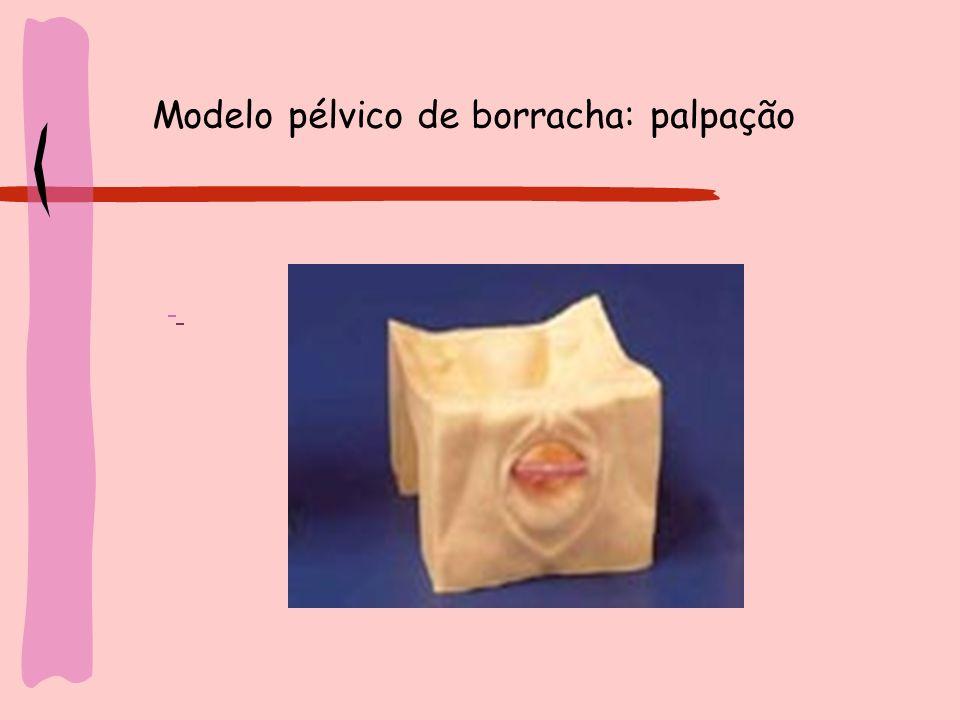 Modelo pélvico de borracha: palpação