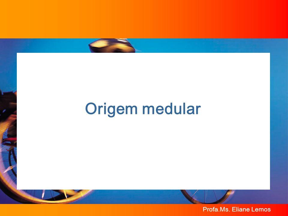 Origem medular Profa.Ms. Eliane Lemos