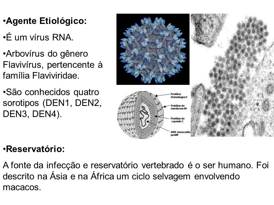 Agente Etiológico: É um vírus RNA. Arbovírus do gênero Flavivírus, pertencente à família Flaviviridae.