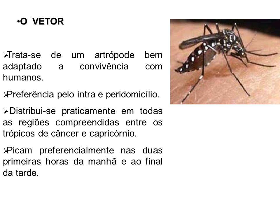 O VETOR Trata-se de um artrópode bem adaptado a convivência com humanos. Preferência pelo intra e peridomicílio.