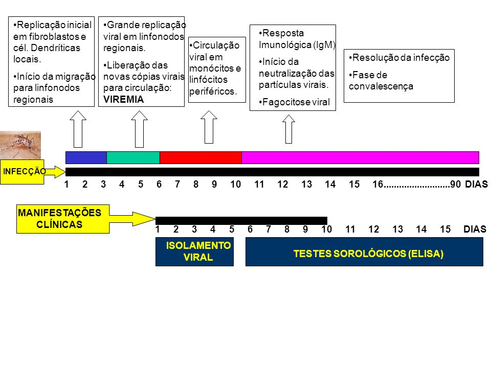 MANIFESTAÇÕES CLÍNICAS TESTES SOROLÓGICOS (ELISA)