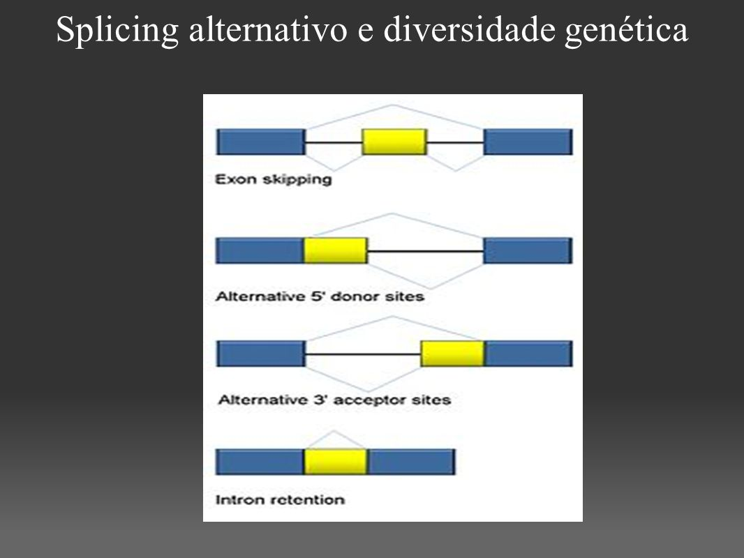 Splicing alternativo e diversidade genética