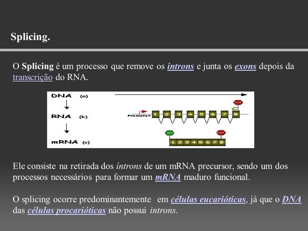 Splicing. O Splicing é um processo que remove os introns e junta os exons depois da transcrição do RNA.