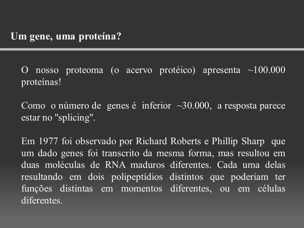 Um gene, uma proteína O nosso proteoma (o acervo protéico) apresenta ~100.000 proteínas!