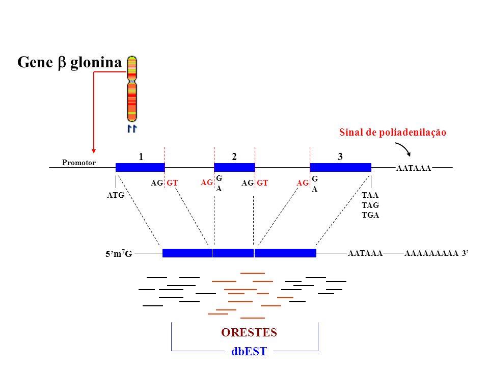 Gene  glonina ORESTES dbEST 1 2 3 Sinal de poliadenilação 5'm7G G A