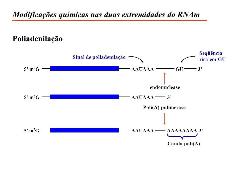 Modificações químicas nas duas extremidades do RNAm