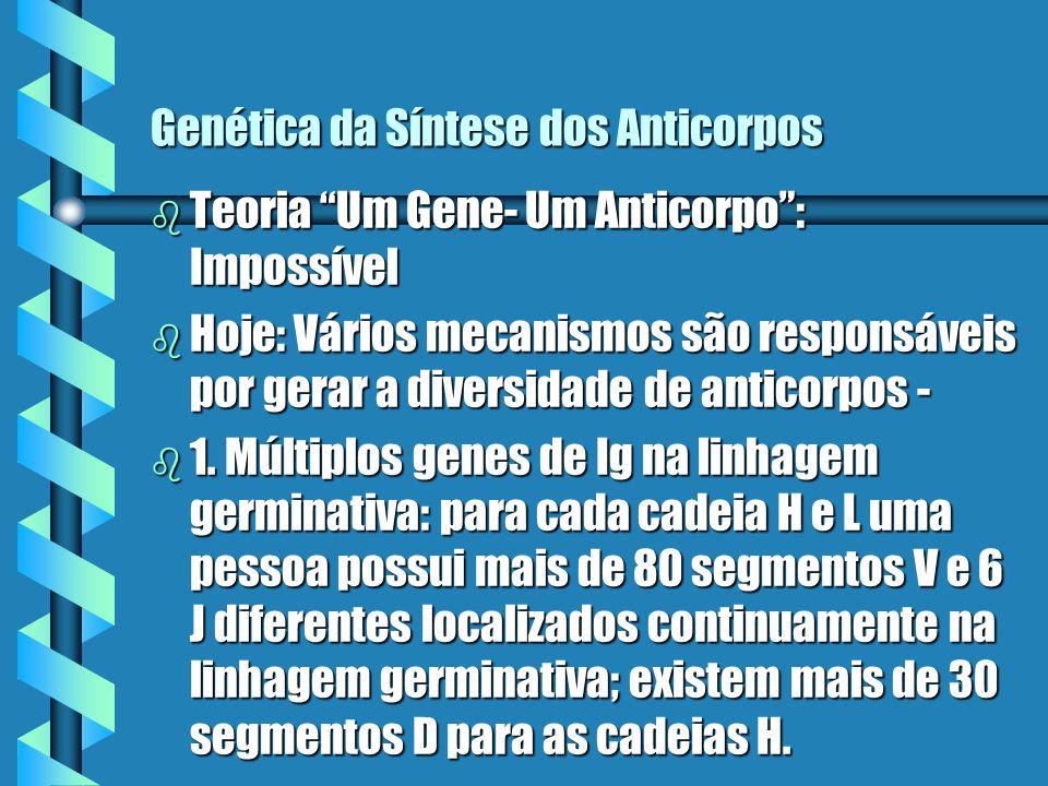 Genética da Síntese dos Anticorpos