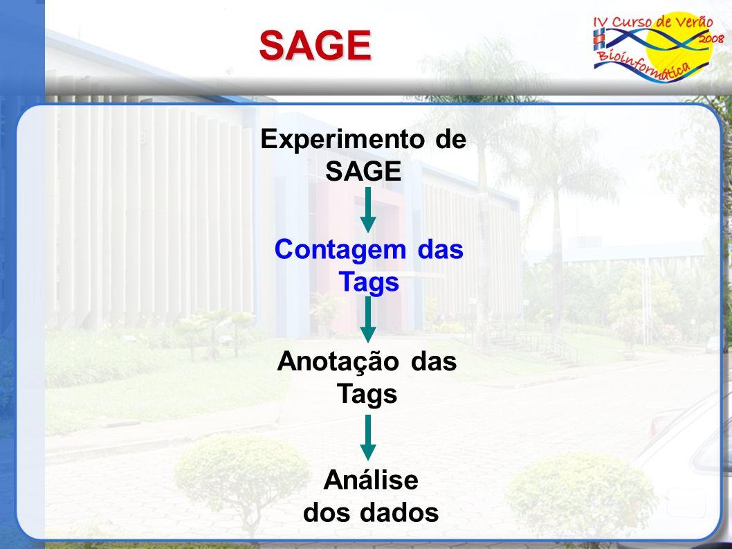 SAGE Experimento de SAGE Contagem das Tags Anotação das Tags Análise