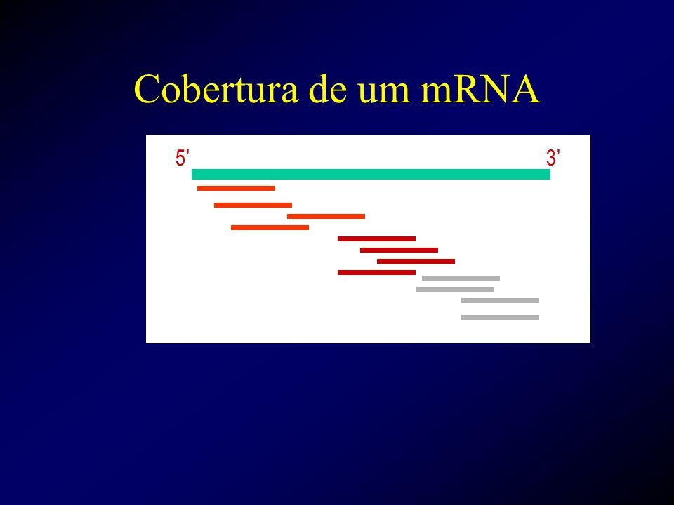 Cobertura de um mRNA 5' 3'