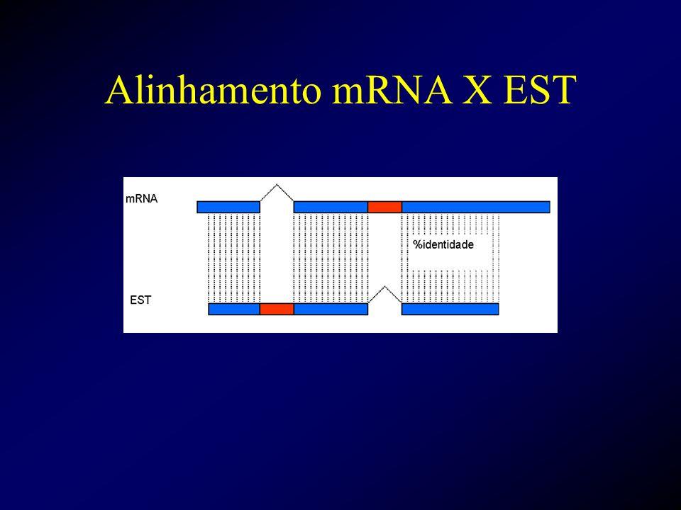 Alinhamento mRNA X EST