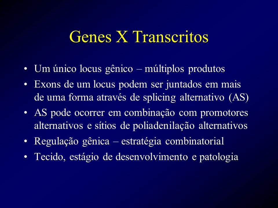 Genes X Transcritos Um único locus gênico – múltiplos produtos