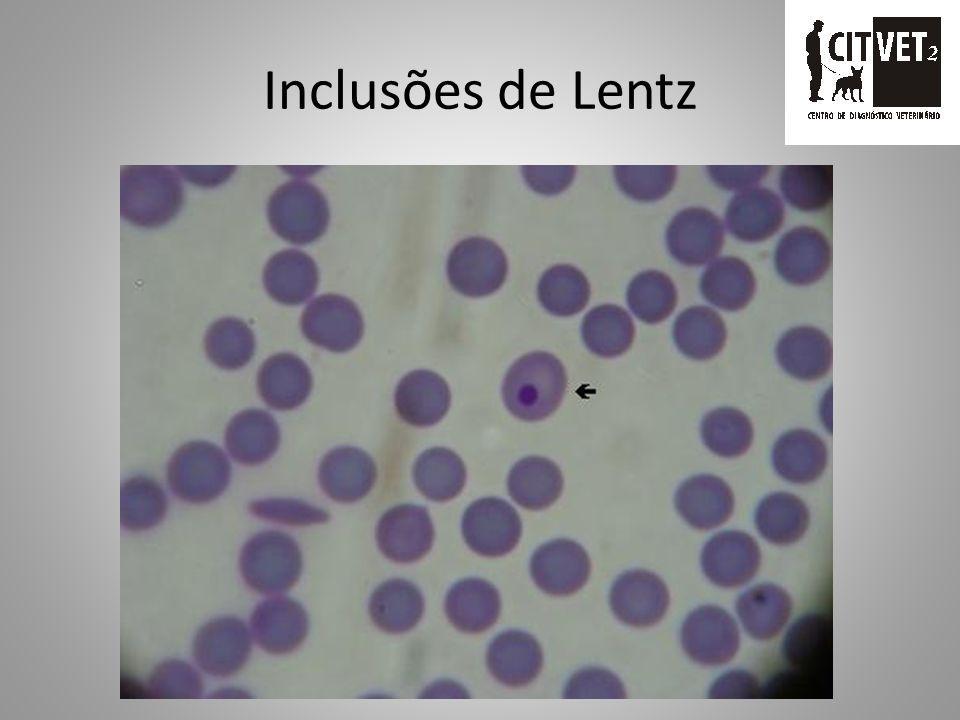 Inclusões de Lentz