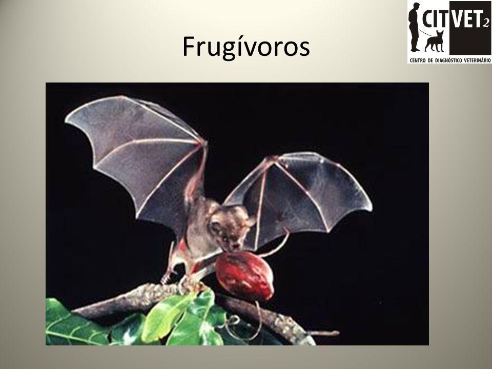 Frugívoros