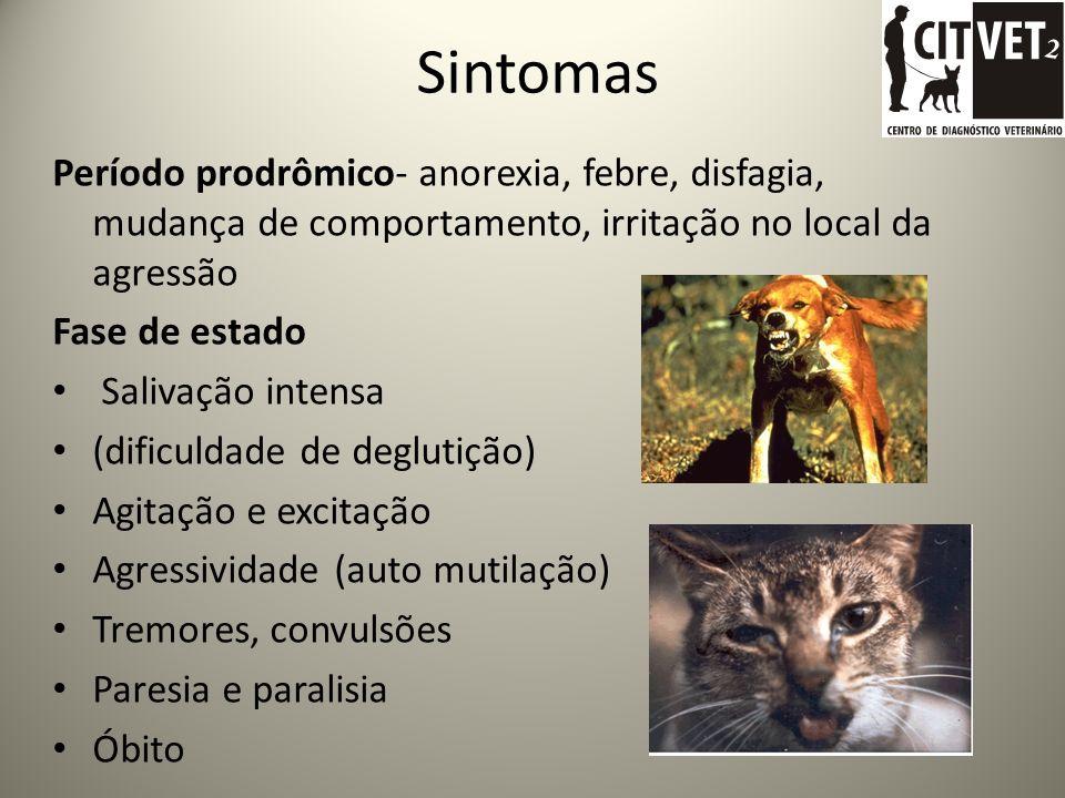 Sintomas Período prodrômico- anorexia, febre, disfagia, mudança de comportamento, irritação no local da agressão.