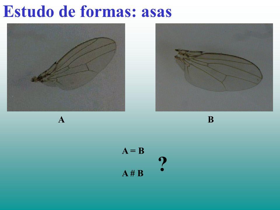 Estudo de formas: asas A B A = B A # B
