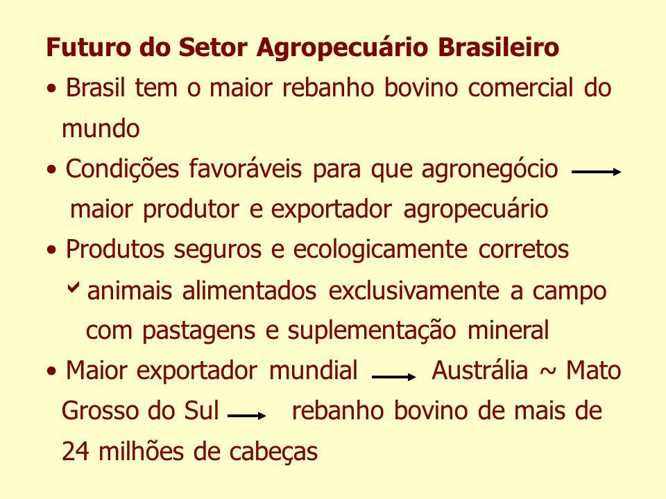 Futuro do Setor Agropecuário Brasileiro