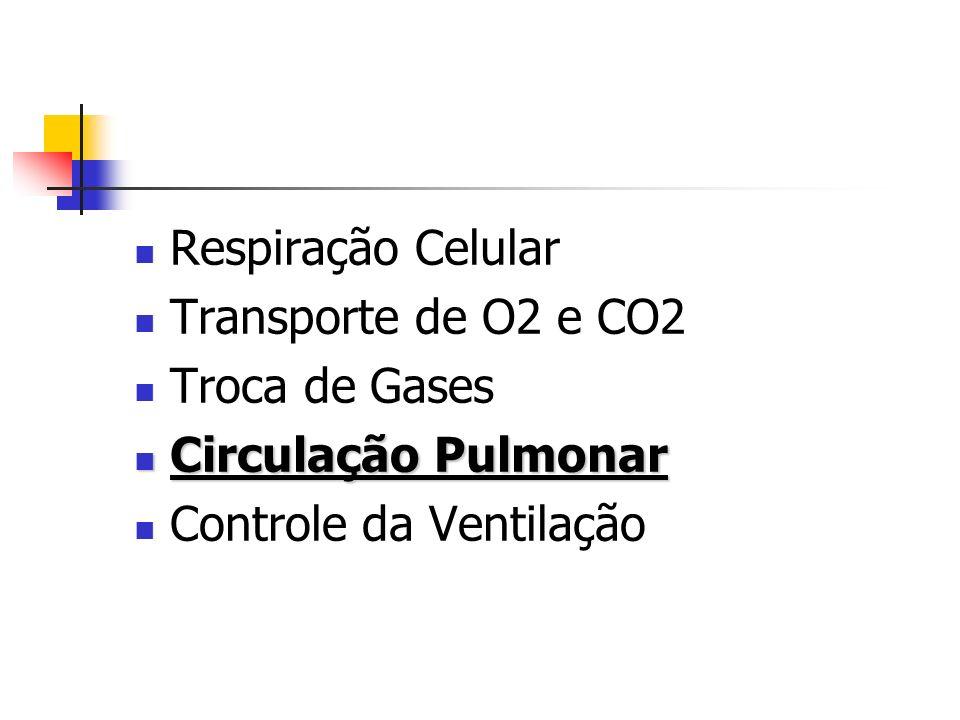Respiração Celular Transporte de O2 e CO2 Troca de Gases Circulação Pulmonar Controle da Ventilação