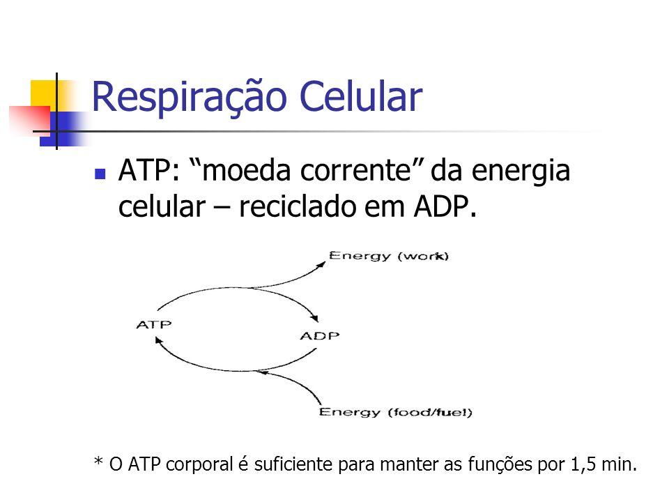 Respiração Celular ATP: moeda corrente da energia celular – reciclado em ADP.