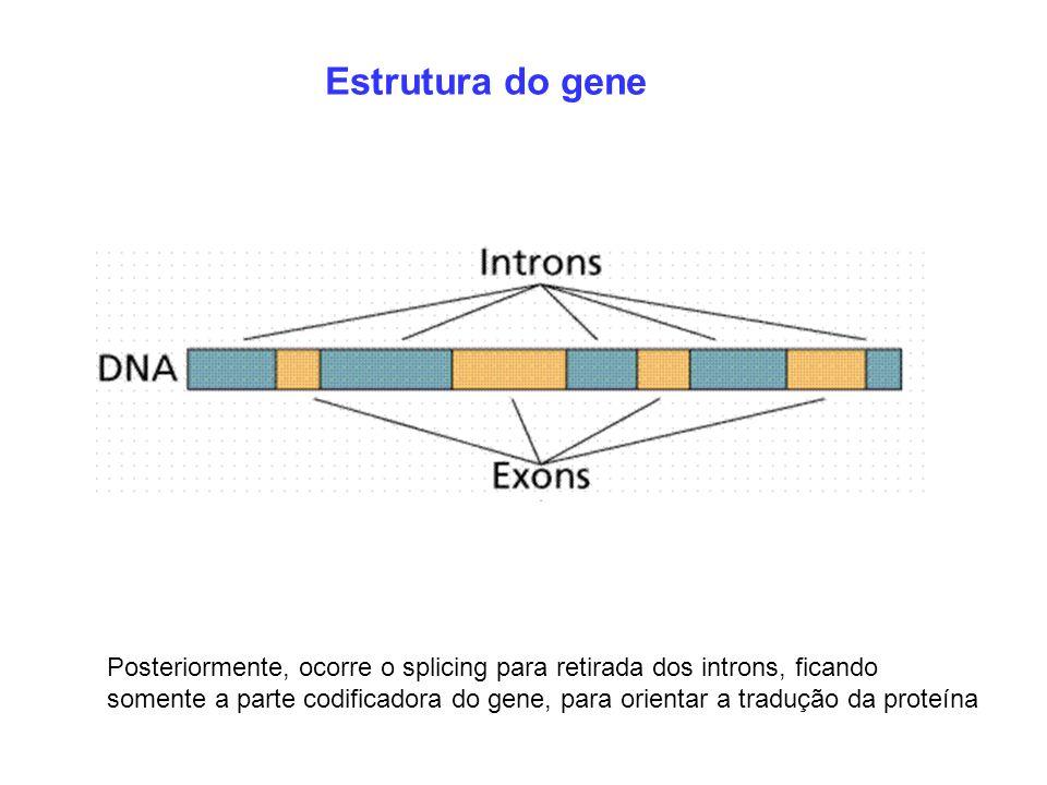 Estrutura do gene Posteriormente, ocorre o splicing para retirada dos introns, ficando.