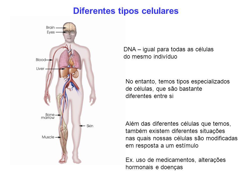 Diferentes tipos celulares
