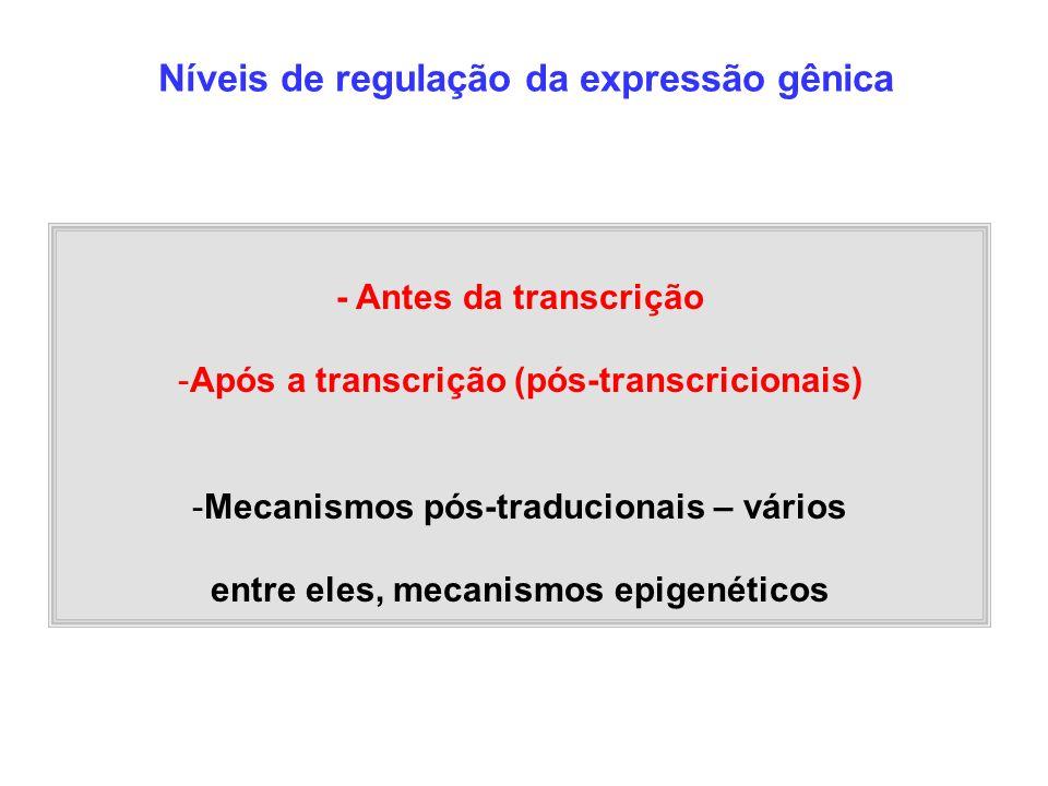 Níveis de regulação da expressão gênica