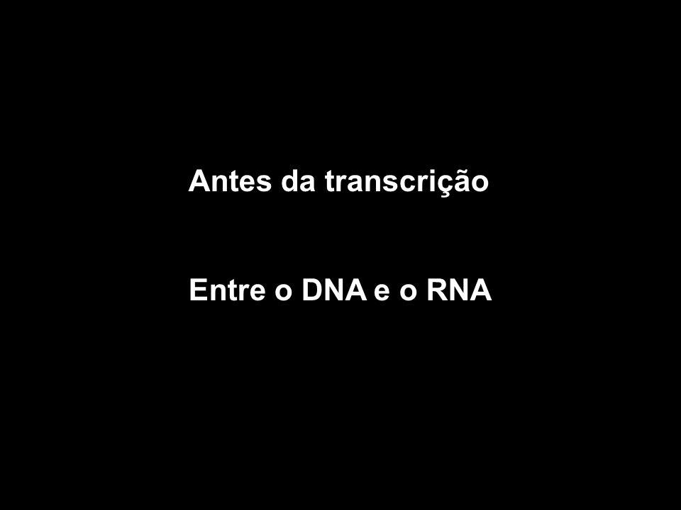 Antes da transcrição Entre o DNA e o RNA