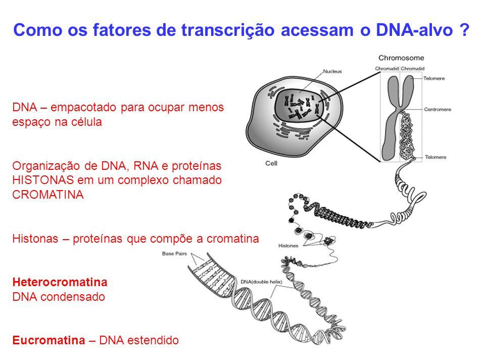 Como os fatores de transcrição acessam o DNA-alvo