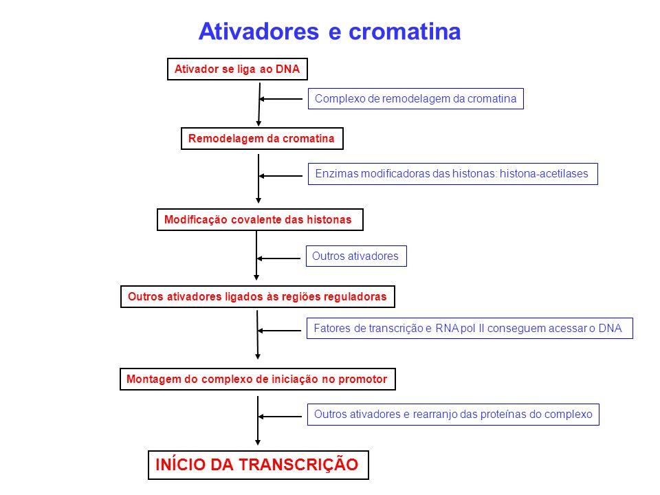 Ativadores e cromatina