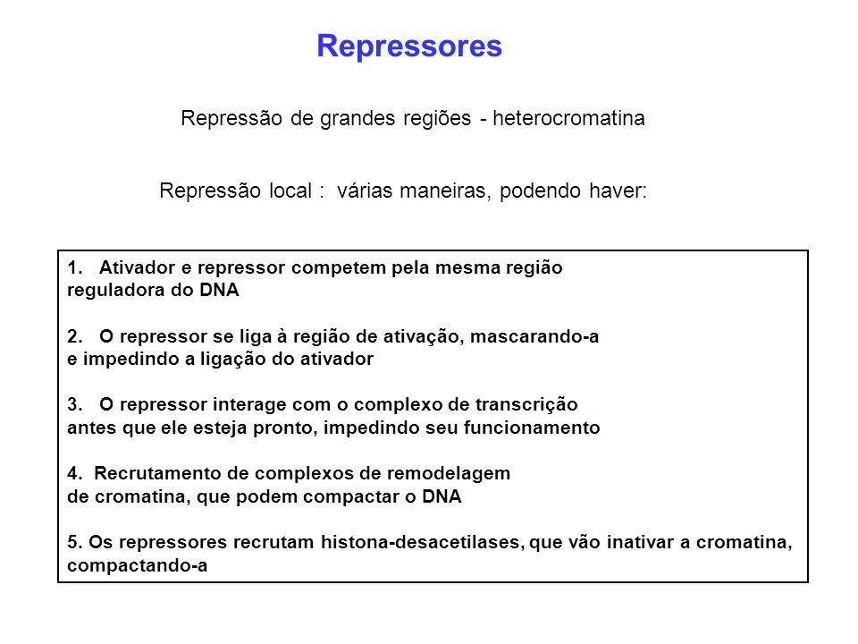 Repressores Repressão de grandes regiões - heterocromatina